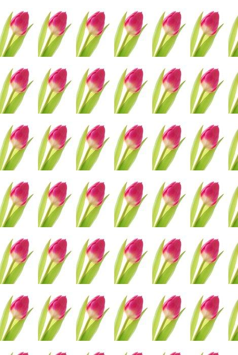 Vinylová Tapeta Close-up barevné jarní Tulipán proti bílému pozadí - Květiny