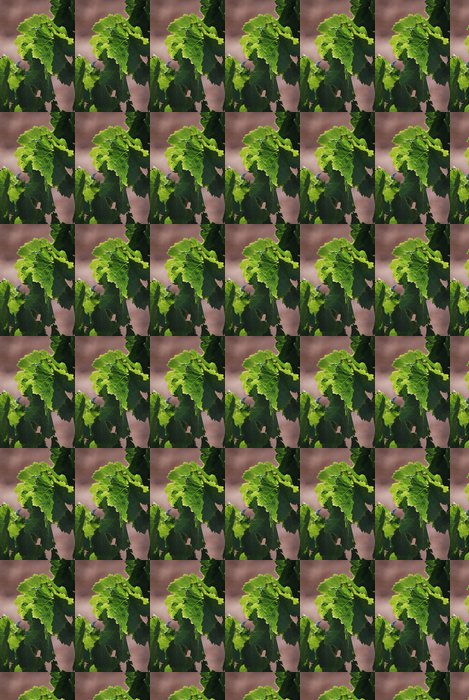 Vinylová Tapeta Feuilles de vignes - Rostliny