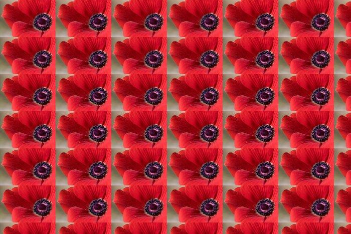 Vinylová Tapeta Close-up Červený květ Anemone - Štěstí