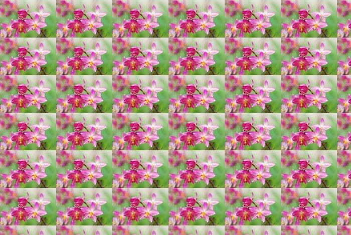 Vinylová Tapeta Světle růžová krásné orchideje - Květiny