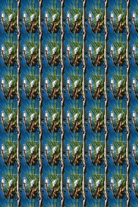 Vinylová Tapeta Australský strom s ptáky - Ptáci