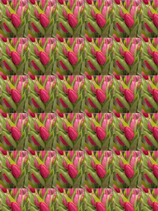 Vinylová Tapeta Tulipan - Štěstí