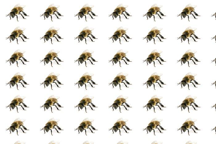 Vinylová Tapeta Bee, Apis mellifera, evropské nebo západní včela medonosná - Ostatní Ostatní