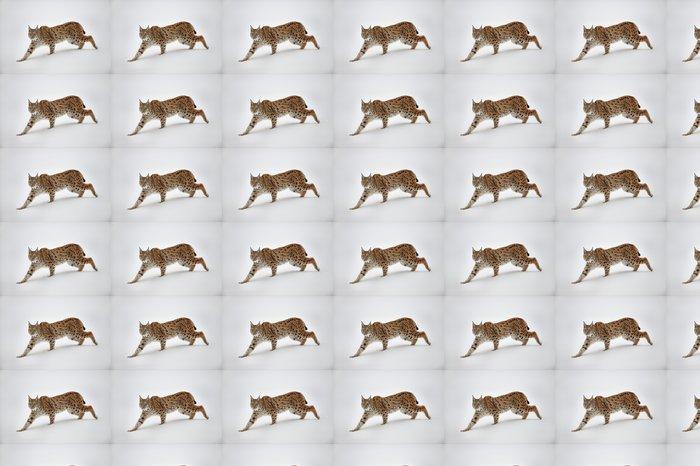 Vinylová Tapeta Lynx ve sněhu - Roční období