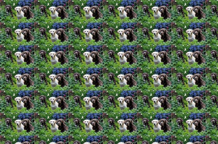 Vinylová Tapeta Tři labradors - Savci