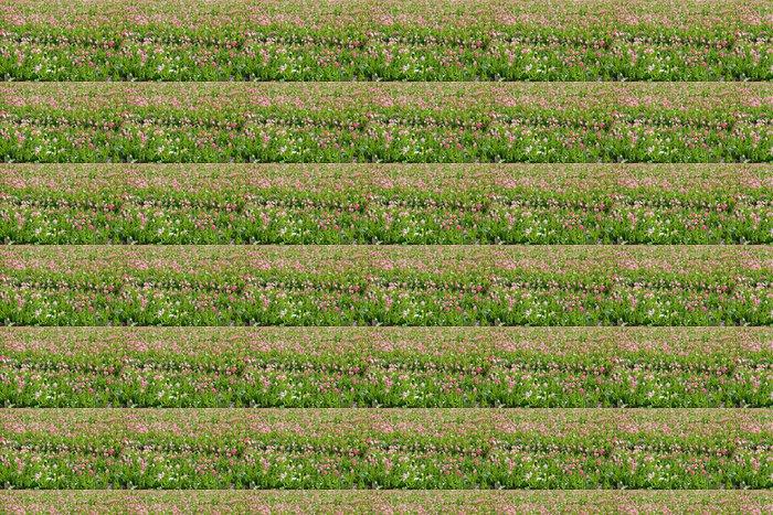 Vinylová Tapeta Růžové tulipány pole v slunečný den - Roční období