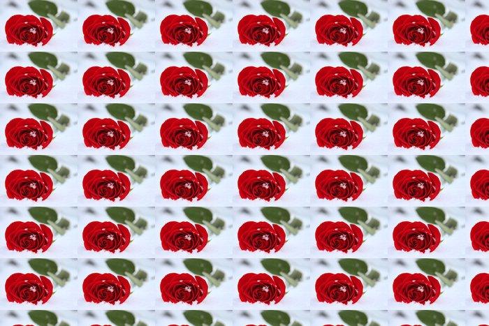 Vinylová Tapeta Růže v zimě - Květiny
