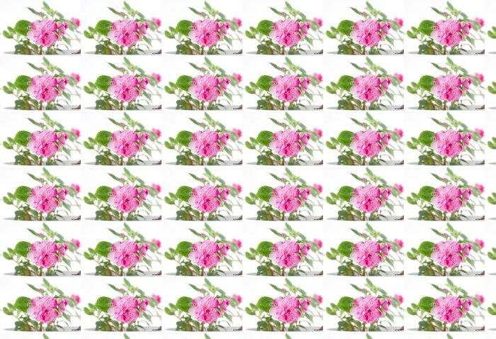 Vinylová Tapeta Květu (Balsaminaceae). Mělké DOF. - Květiny