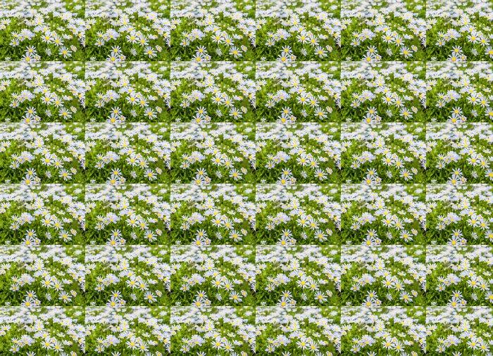 Vinylová Tapeta Pučící a kvetoucí rostliny Modrá Marguerite - Roční období
