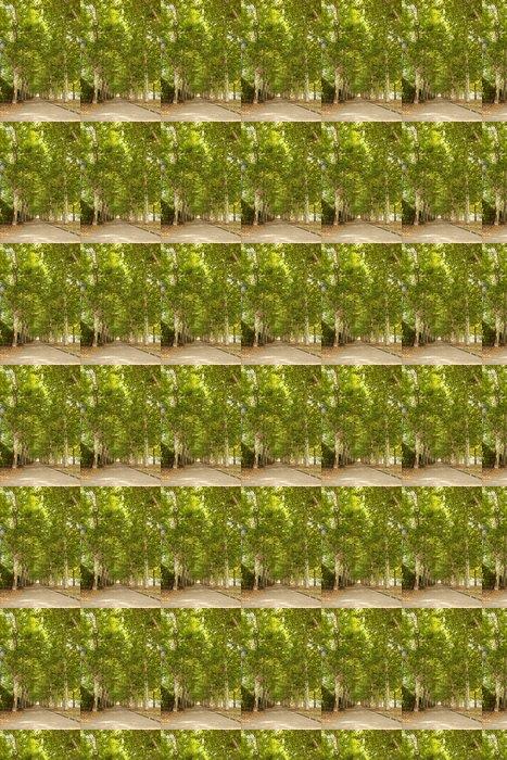 Vinylová Tapeta Chodník podél lemované stromy v parku - Město