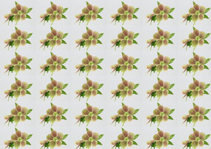 Vinylová Tapeta Ten Ren Rose Helleborus - Květiny