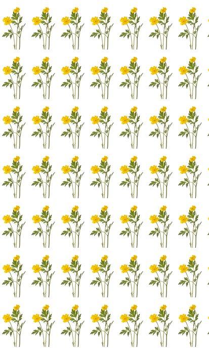 buttercup Vinyl Wallpaper - Plants