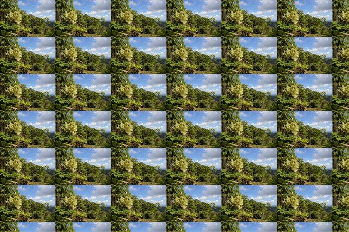 Vinylová Tapeta Palmiers royaux du Jardin Balata - Prázdniny