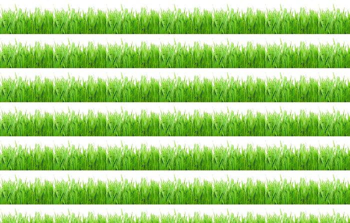 Vinylová Tapeta Zelená tráva - Roční období