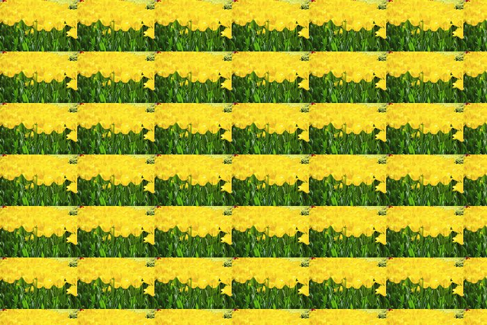 Papier peint à motifs vinyle Tulipe jaune - Thèmes
