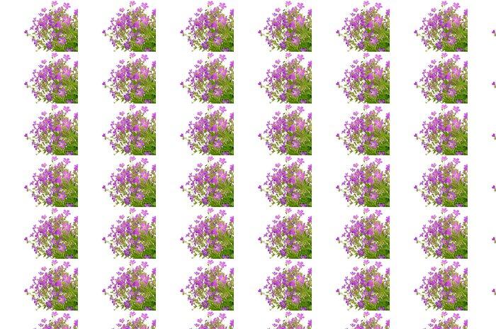 Vinylová Tapeta Fialové divokých květin - Květiny