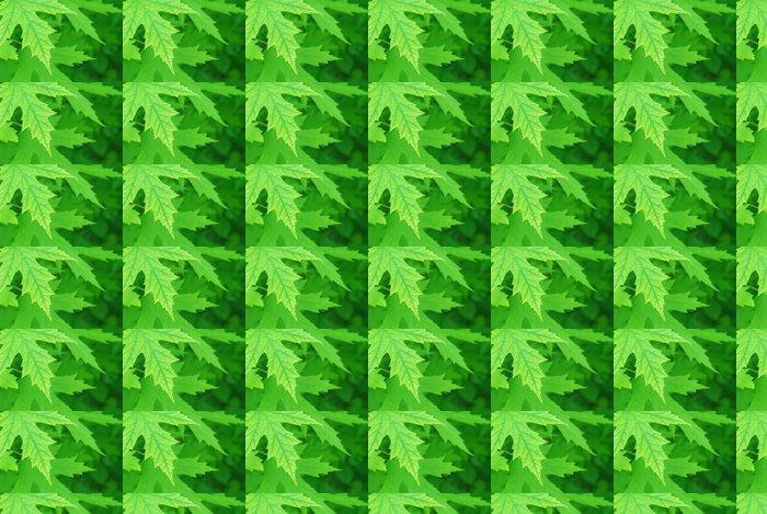 Vinylová Tapeta Krásné zelené pozadí - Struktury