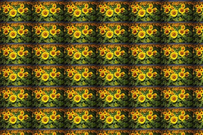 Vinylová Tapeta Sunflowers - Příroda a divočina