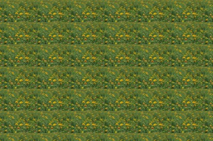 Vinylová Tapeta Světlice barvířská - Květiny