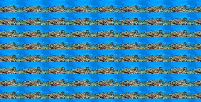 Vinylová Tapeta Korálový útes panoramatické - Korálové útesy