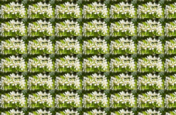 Vinylová Tapeta Sakura - Roční období
