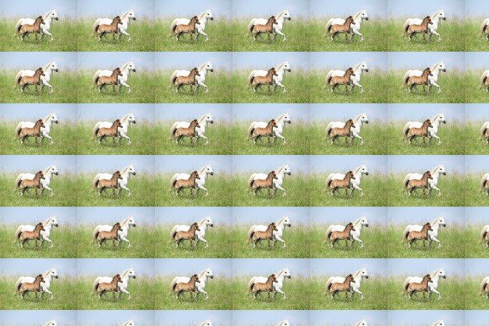 Vinylová Tapeta Portrét krásné arabského koně - Savci