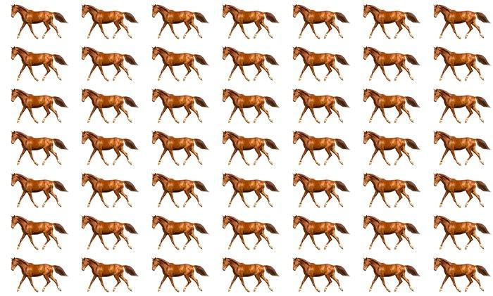 Vinylová Tapeta Mladý kůň - Savci