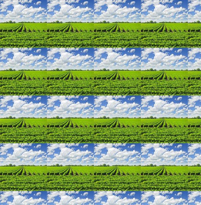 Vinylová Tapeta Řádky sójových rostlin v oblasti - Zemědělství