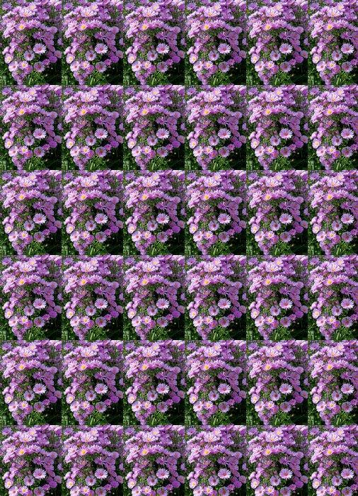 Vinylová Tapeta Herbstaster - Aster dumosus - Květiny