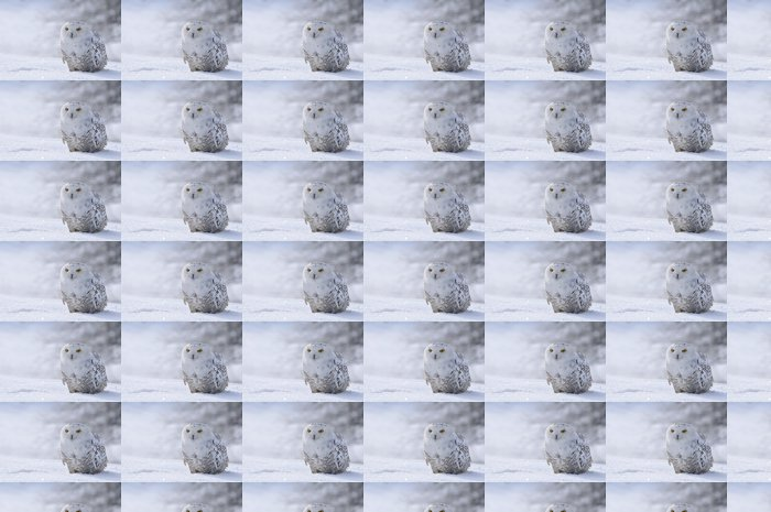 Vinylová Tapeta Sněžná sova sedí na sněhu - Témata