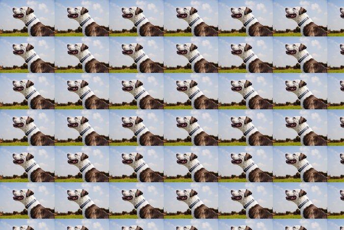 Vinyltapete Glückliche Pitbull im Park - Säugetiere