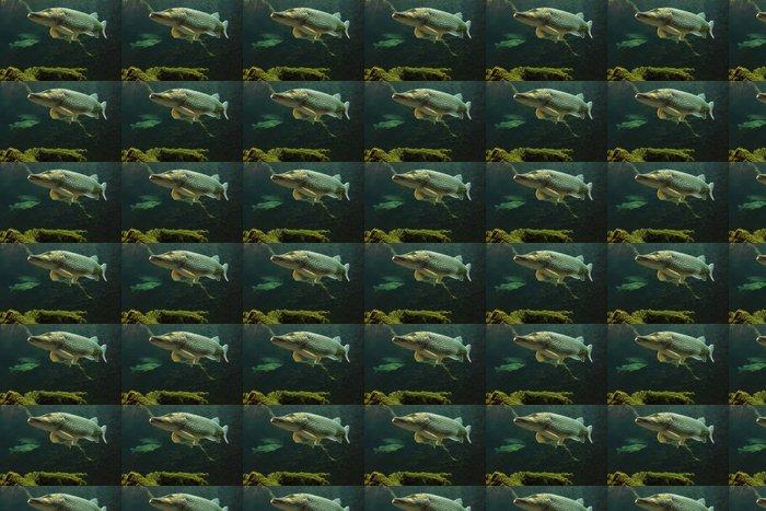 Vinylová Tapeta Podvodní fotografie z Pike velké (Esox lucius). - Témata