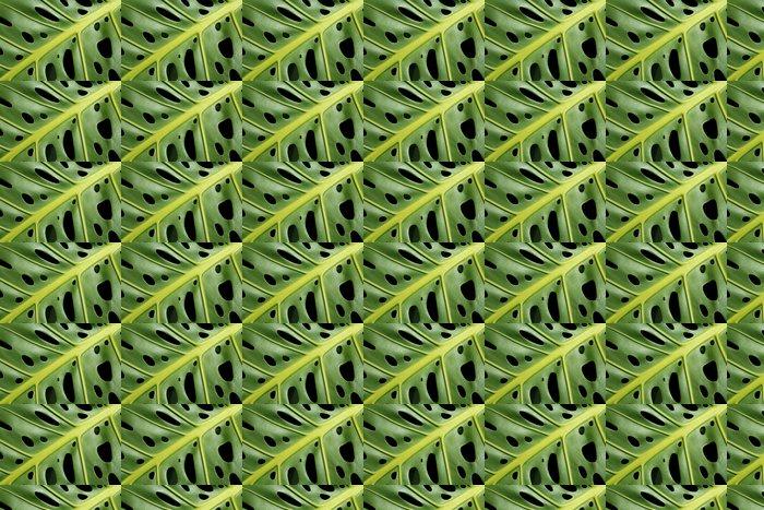 Vinylová Tapeta Monstera deliciosa list - Domov a zahrada