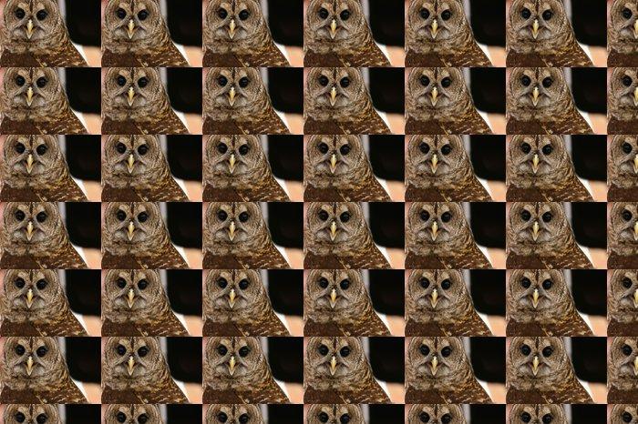Vinylová Tapeta Brown Owl - Ptáci