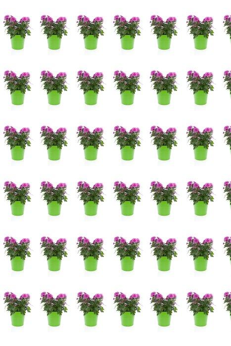 Vinylová Tapeta Fialová chrysant DAISIE rostlin zelená květináč - Květiny