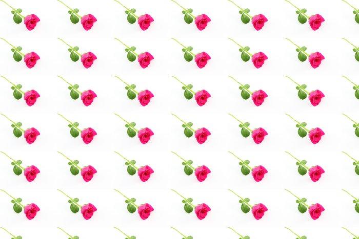 Vinylová Tapeta Jednotný růžové růže na bílé podlaze. - Květiny