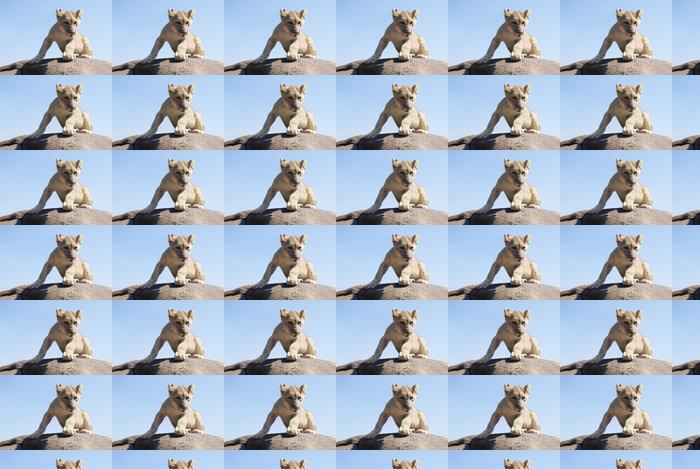 Vinyltapete Löwenbaby auf einem Felsen - Themen