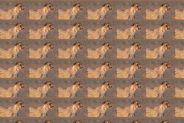 Vinylová Tapeta Gepard na lovu - Savci