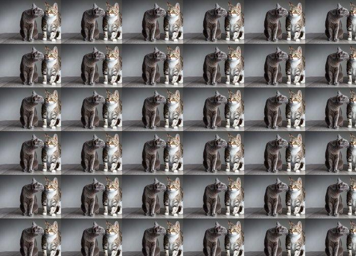 Vinylová Tapeta Dvě kočky - Savci