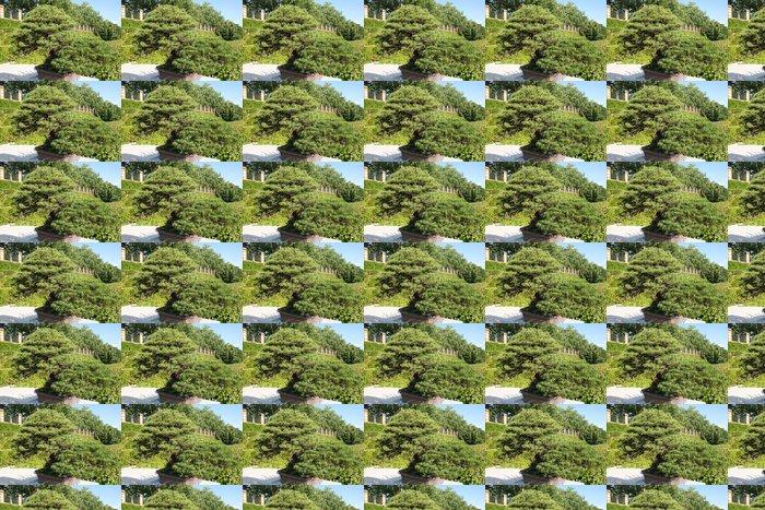 Vinylová Tapeta Bonsai borovice drobnokvětá - Stromy