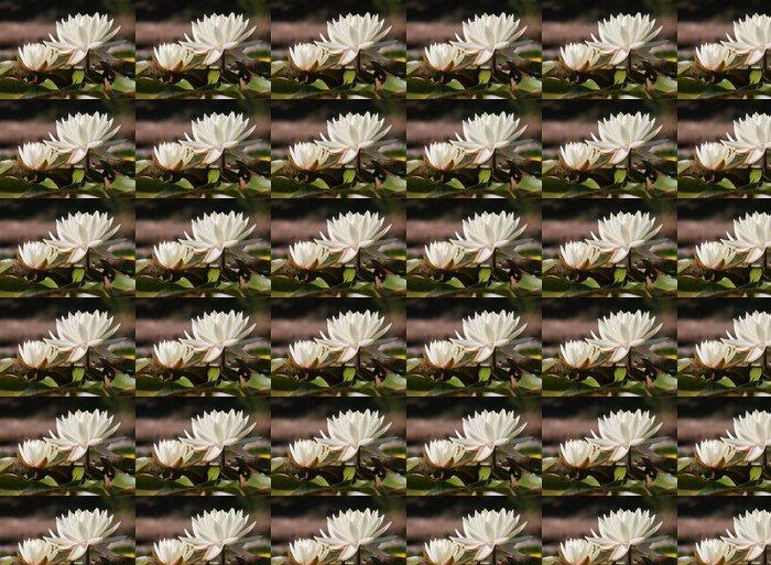Vinylová Tapeta Bílý leknín na zahradním jezírku - Květiny