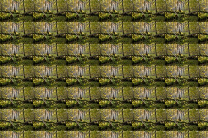 Old oak trees broken lying Vinyl Wallpaper - Europe