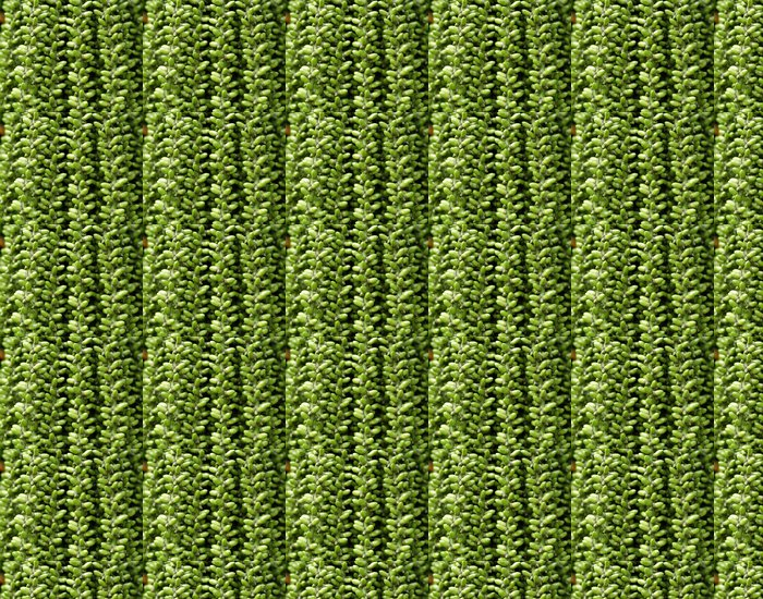 tropical queen palm fruit close-up Vinyl Wallpaper - Agriculture