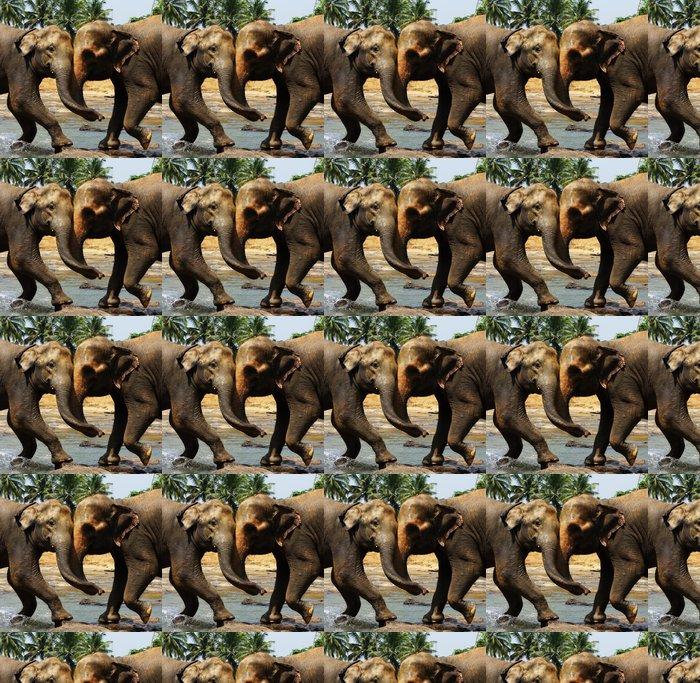 Vinylová Tapeta Dva velké divoké slonů indických společně jedno-jedno - Úspěch