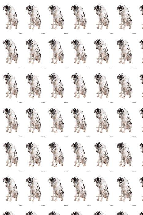 Vinylová Tapeta Německá doga pes dívat se dolů - Savci