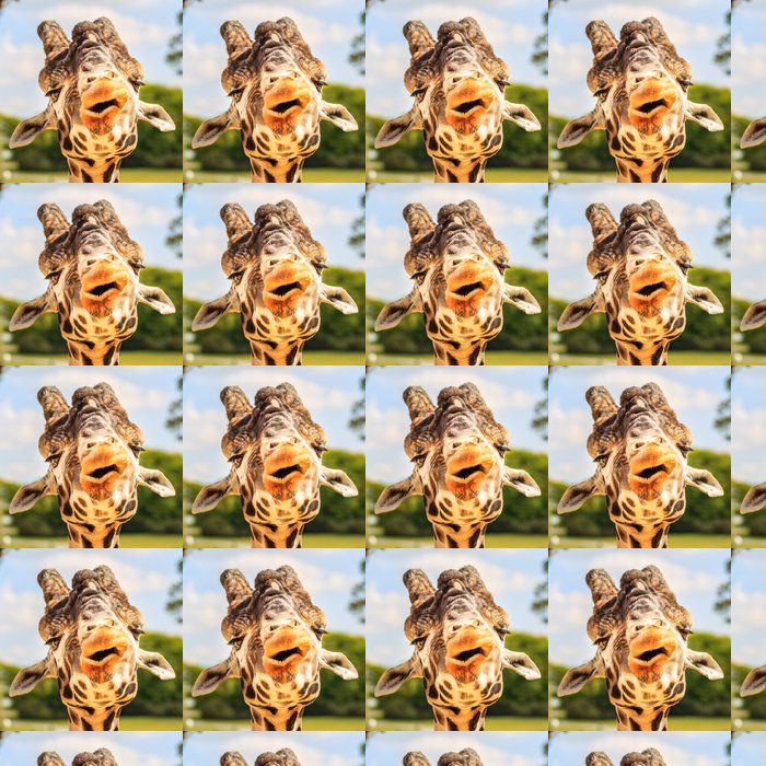 Vinylová Tapeta Žirafa (Giraffa camelopardalis) žvýkání. - Témata