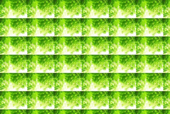 Vinylová Tapeta Zelená javorové listy se slunečními paprsky - Stromy