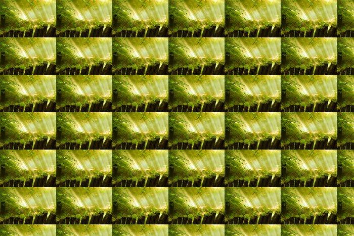 Vinylová Tapeta Sluneční paprsky koryto mlha les - Roční období