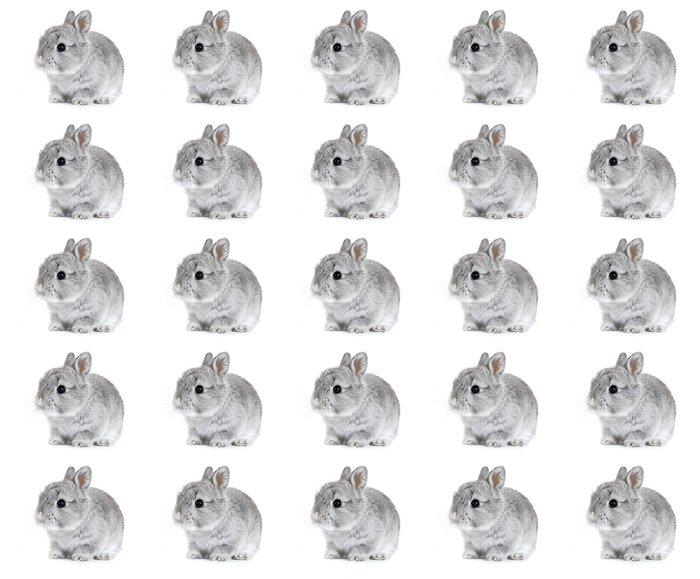 Vinylová Tapeta Šedá králík králíček dítě na bílém pozadí - Králíci