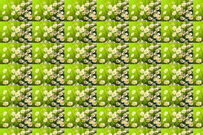 Vinyltapete Daisy Blume auf der grünen Wiese - Blumen